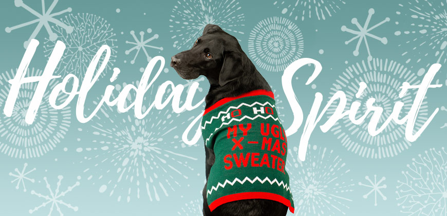 Black Lab in ugly holiday sweater